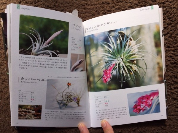 Tillandsia Book中身
