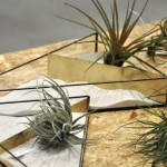 SHAPE OF PLANTS 植物のかたちBEIGE