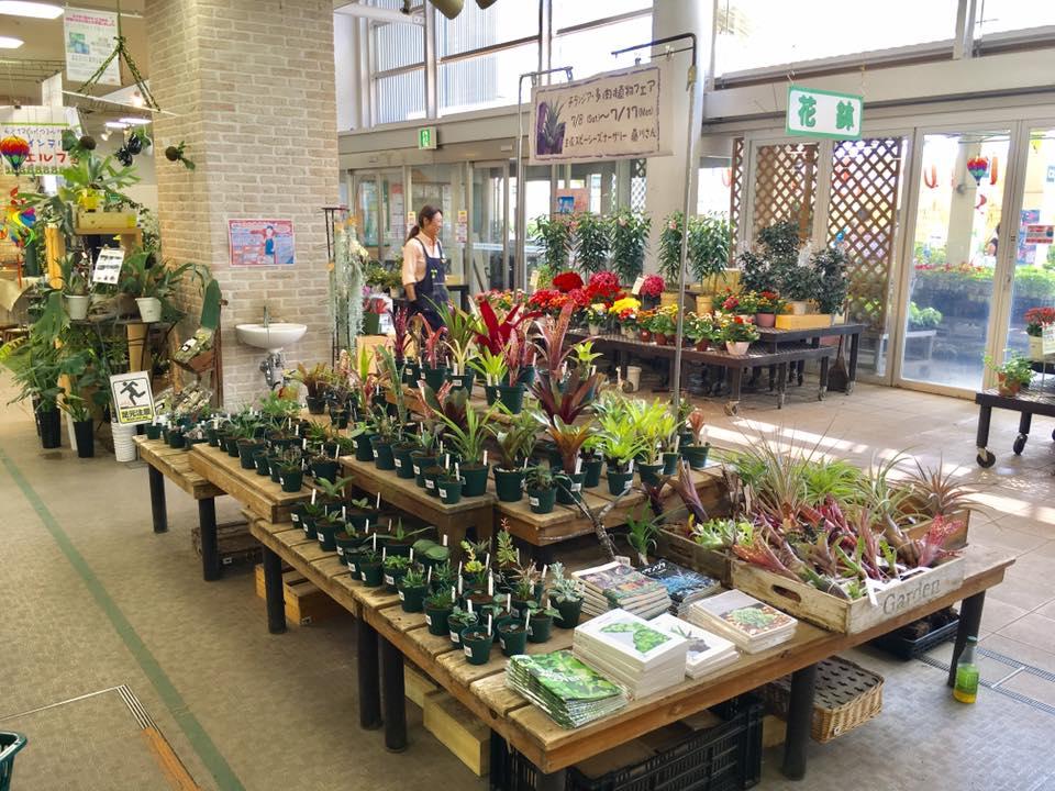 チランジア・多肉植物フェア @ サカタのタネ ガーデンセンター横浜 | 横浜市 | 神奈川県 | 日本