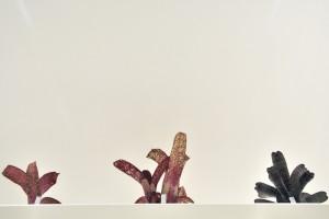 ティランジア即売会&植付トークイベント @ 小田原フラワーガーデン管理棟1Fエントランス | 小田原市 | 神奈川県 | 日本