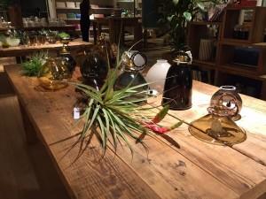 SUNSHINE+CLOUD(葉山)にて植物の販売を致します @ SUNSHINE+CLOUD | 葉山町 | 神奈川県 | 日本