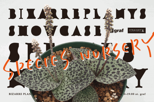 Bizarre Plants Showcace graf