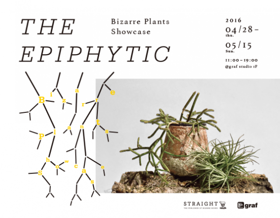 THE EPIPHYTIC -Bizarre Plants Showcase- @ graf studio | 大阪市 | 大阪府 | 日本