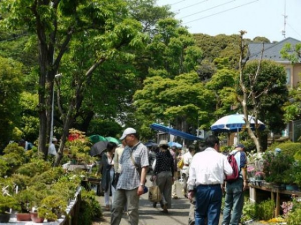 大宮盆栽まつり2018 @ 埼玉県さいたま市北区盆栽町 | さいたま市 | 埼玉県 | 日本