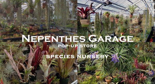 """NEPENTHES GARAGE"" POP-UP STORE - SPECIES NURSERY @ NEPENTHES GARAGE 
