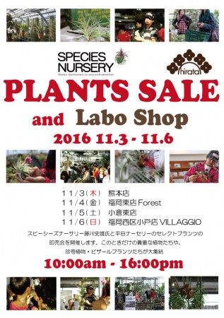 PLNANTS SALE and Labo Shop @ 平田ナーセリー熊本店 | 熊本市 | 熊本県 | 日本